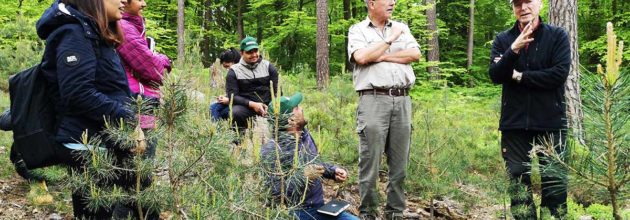 A global team of students in Palatinate forests to learn about German forestry